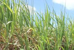 Sugar cane energy capacity Captech